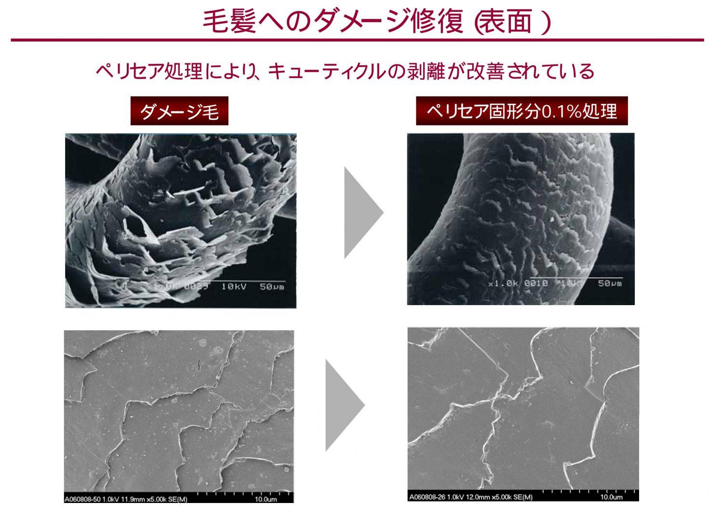 ペリセア ペリセア処理により、キューティクルの剥離が改善されている